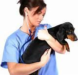 Veterinary Medical Doctor Images